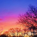Autumn Sky by Susan Carella