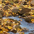 Autumn Slipping Away 0437 by Michael Peychich