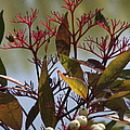 Autumn Snow Berry Bush by Darleen Stry