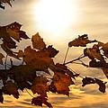 Autumn Splendor by Bill Cannon
