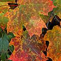 Autumn Splendor by Doris Potter