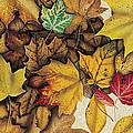 Autumn Splendor by JQ Licensing