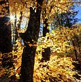 Autumn Splendor  by Saija  Lehtonen