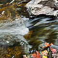 Autumn Stream by Cheryl Baxter