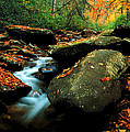 Autumn Stream by Chuck Wickham