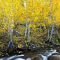 Autumn Stream Iv by MakenaStockMedia - Printscapes