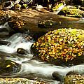 Autumn Stream by Lena Auxier