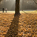 Autumn Stroll by Ian Middleton