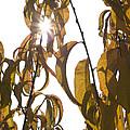 Autumn Sunburst by Ian Middleton