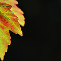 Autumn Surprise by Melanie Moraga