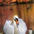 Autumn Swan by Leslie Leda