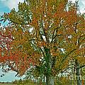 Autumn Sweetgum Tree by Debbie Portwood