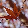 Autumn Swing by Yumi Johnson