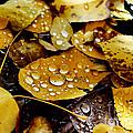 Autumn Tears by Wesley Hahn