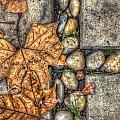 Autumn Texture by Wayne Sherriff