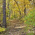 Autumn Trail by John Zawacki