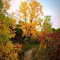 Autumn Trail by Kay Novy
