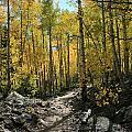 Autumn Trail by Mark Sacco