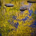 Autumn Tree Reflections With Rocks On The Muskegon River by Randall Nyhof