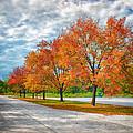 Autumn Trees At Busch by Bill Tiepelman