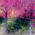 Autumn Trees by Carol Leigh