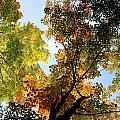 Autumn Trees Low-angle by David Chapman