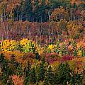 Autumn Trees Panorama by Matt Dobson