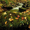 Autumn View Shows Fallen Leaves by Raymond Gehman