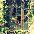 Autumn Vines Across A Window by Georgia Fowler