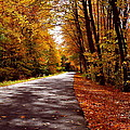 Autumn Walk by Christine Tobolski