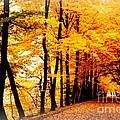 Autumn Walk In Belgium by Carol Groenen