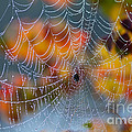 Autumn Web by Joan McCool