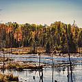 Autumn Wetland by Jo-Anne Gazo-McKim
