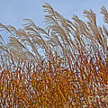 Autumn Wind Through The Grass by Mary Machare