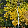 Autumn Wonder by Jim Garrison