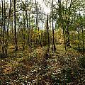 Autumn Wood by Erik Tanghe