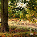 Autumn Woodland by Ann Garrett