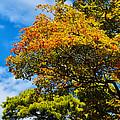Autumnal Fruition by Rachel Cohen