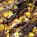 Autumnal Melody by Leon Zernitsky