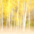 Autumns Abstract by Optical Playground By MP Ray
