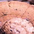 Autumn's Abstract Mushroom by Maria Urso