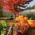 Autumns Colorful Harvest  by Sandra Cunningham