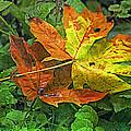 Autumn's Gift by Bonnie Bruno
