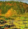 Autumn's Glory by Donald Black