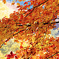 Autumns Gold Great Smoky Mountains by Rich Franco