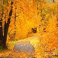 Autumn's Golden Corner by Tara Turner