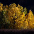 Autumn's Last Hurrah by Wes and Dotty Weber
