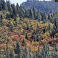 Autumns Palette by Shawn Naranjo