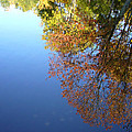 Autumn's Watery Reflection by Shirley Radebach