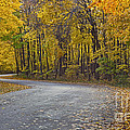 Autunm Road by John Zawacki